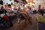 More Fun in Fes, Morocco
