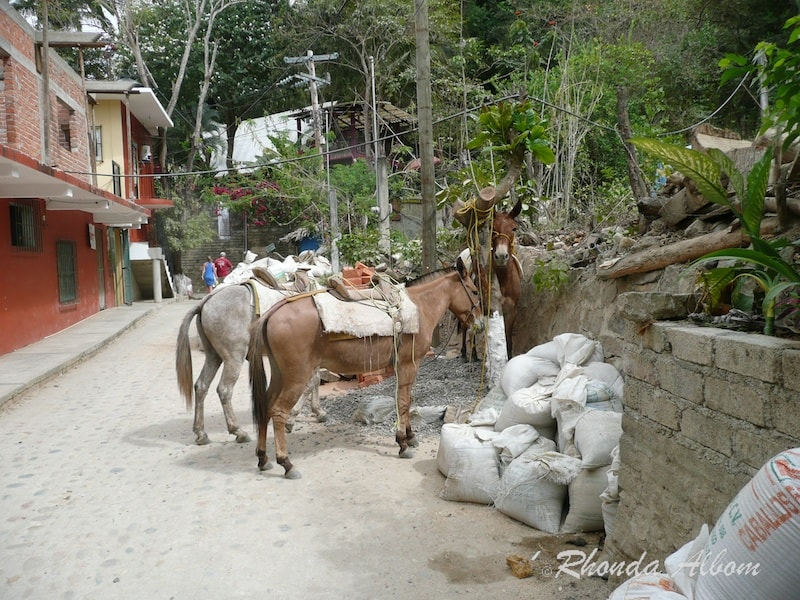 Donkeys are the main transportation in Yelapa, Mexico
