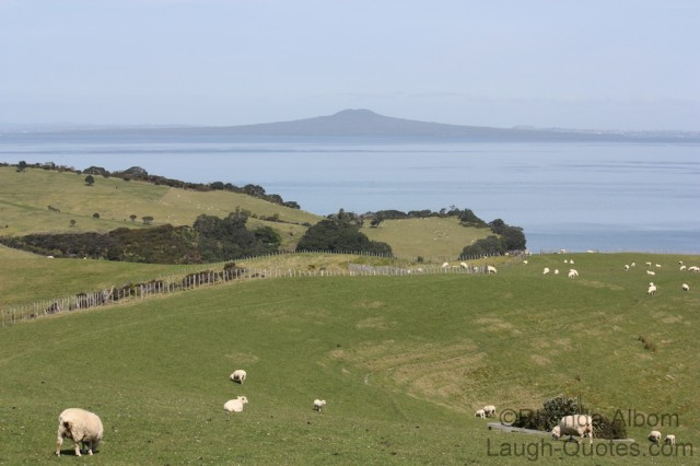 Shakespear Park View from Lookout