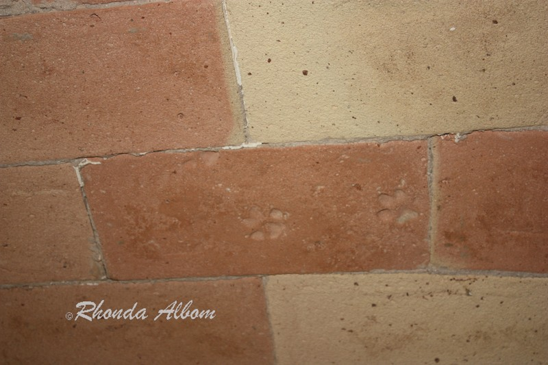 Two paw prints embedded in a ceiling brick of a Palamos home, Spain