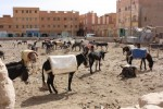 A Donkey Parking Lot in Morocco