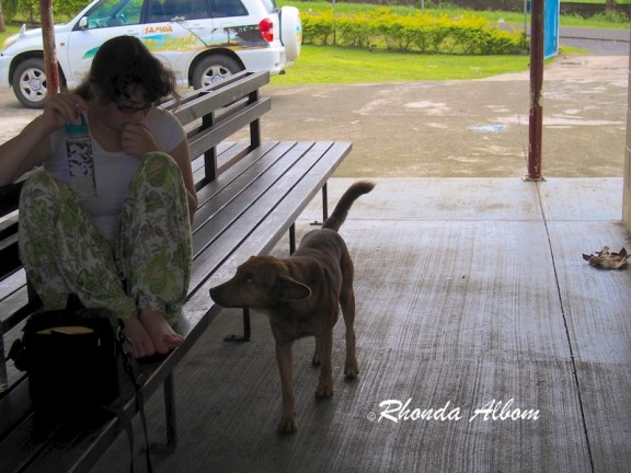Dog in hospital's waiting area in Lalomanu Samoa