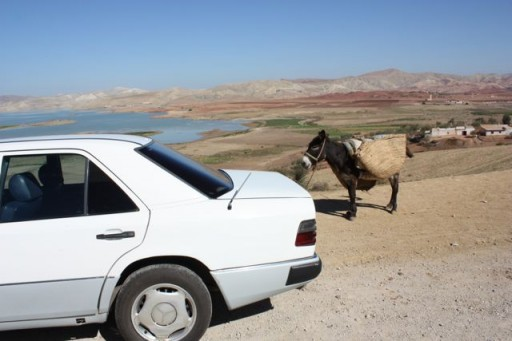 cars and donkeys in morocco