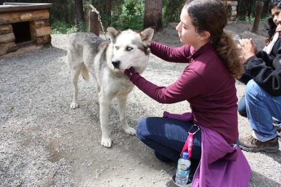 Petting Husky Denali